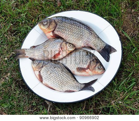 Metal Dish With Fresh Carp