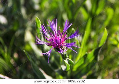 Mountain Flower-2