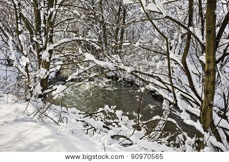 Snow covered branches of trees and bushes on a sunny day on the river