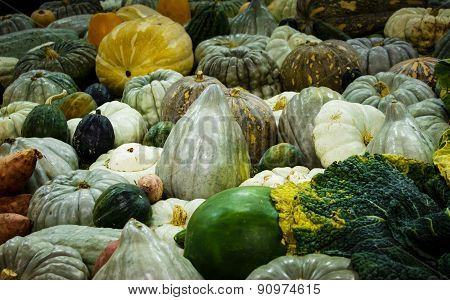 Pumpkin vegetable harvest