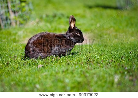 adorable baby rabbit outdoors
