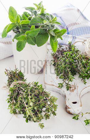 Fresh Green Herbs - Thyme And Oregano