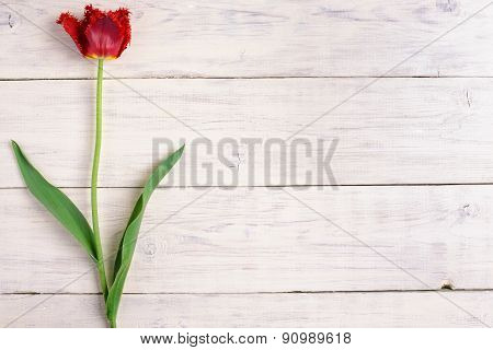 Red Tulip Flower On Wooden Background. Top View, Copy Space.