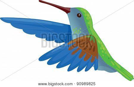 Hummingbird - Illustration