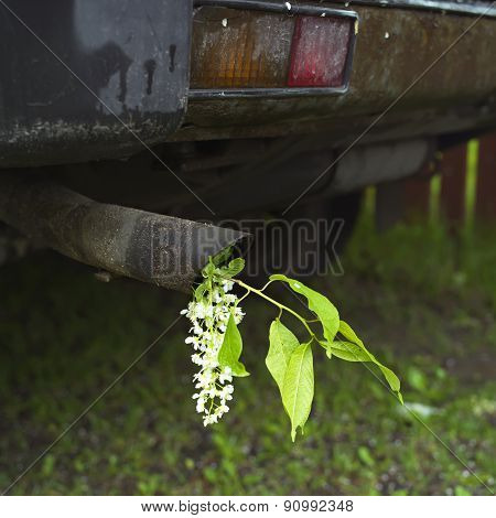 Exhaust Pipe And A Flower