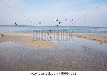 Flock Of Birds On The Beach Of The Baltic Sea In Autumn Day