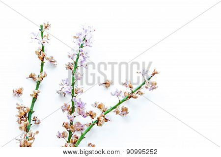 A Branch Dried Orchid On White Background