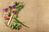 image of sackcloth  - Green herbs and leaves on sackcloth - JPG