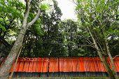 pic of inari  - Torii gates at Fushimi Inari - JPG