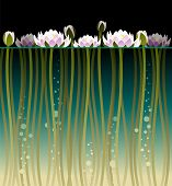 foto of lilly  - Illustration of water lilly and bubbles under water - JPG