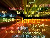 stock photo of cilantro  - Background concept wordcloud multilanguage international many language illustration of cilantro glowing light - JPG
