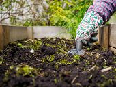 image of weed  - Woman weeding in the garden and she use the garden rake - JPG