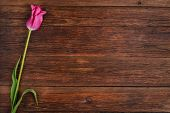 foto of bittersweet  - Pink tulip flower on old wooden table background - JPG