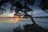 stock photo of bent over  - Beautiful sunset views over the Basin as the calm waters reflect the sky like a mirror and the bent and gnarled trees reach and stretch out over the water - JPG
