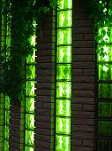 image of ivy vine  - Modern nightclub of the brick decorated with vines and green leaves of wild grapes - JPG