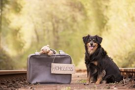 picture of dog tracks  - A dog sits on the tracks with a suitcase and a teddy bear - JPG