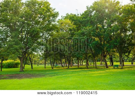 Green Park With Lawn