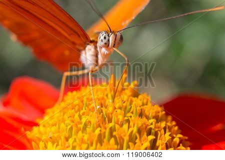 Extreme closeup of a tropical butterfly feeding on a flower.