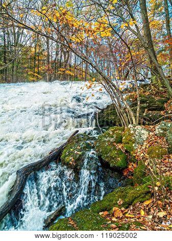Rushing Water Fallen Leaves