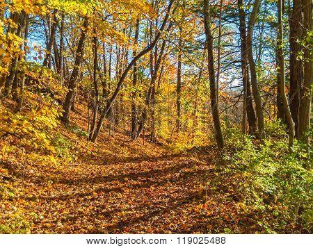 Autumn Woodlands Trail