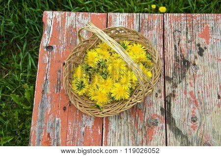 Dandelion Blossoms In Wicker Basket Outdoors
