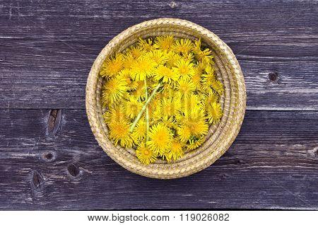 Dandelion Blossoms In Wicker Basket