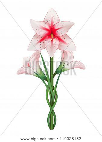 Amaryllis Vector illustration