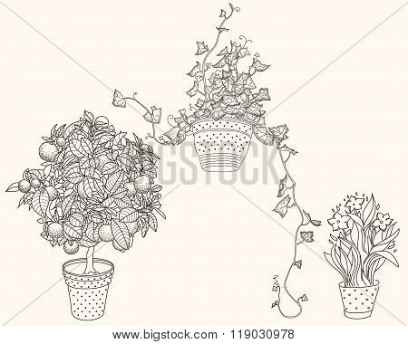 Set of Three Plants
