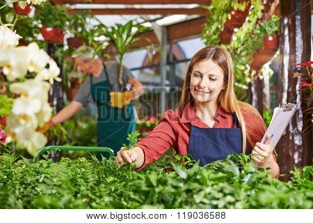 Woman as gardener taking care of plants in a greenhouse
