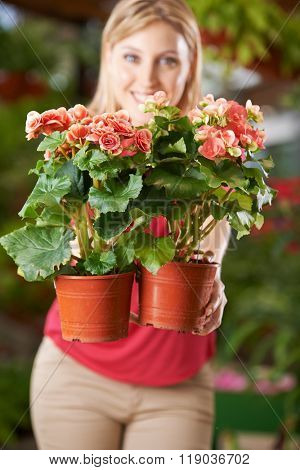 Woman holding two pots with elator-begonia in nursery shop