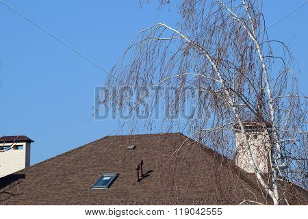 Birch On A Background Of The House Roof.