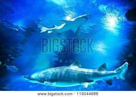 Sharks And Small Fish In Aquarium