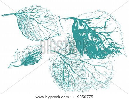 Leaf Of Birch Tree. Autumn Defoliation In The Nature