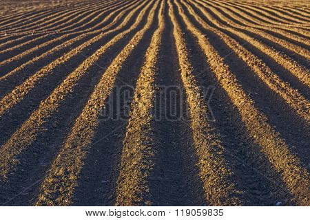 Rows Pattern In A Plowed Field