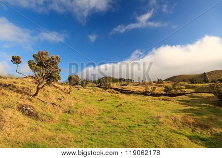 Azores landscape â?? grass, trees and blue cloudy sky