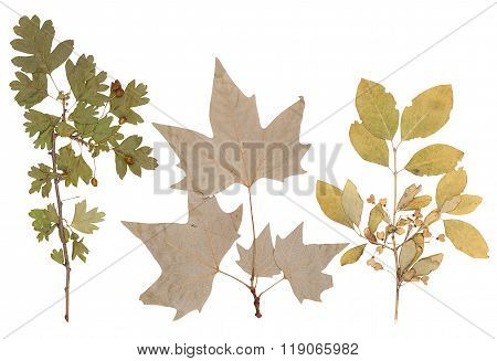 Herbarium Of Various Plants