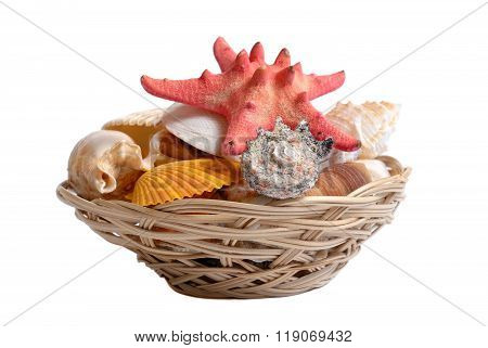 Sea cockleshells and starfish in wattled basket on white