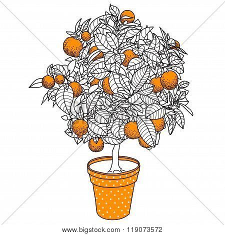Citrus Tangerine, Orange Or Lemon Citrus Tree In A Pot In Contou