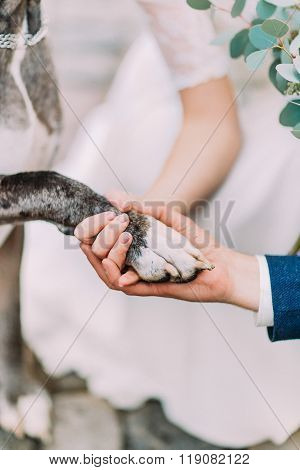 Smart dog gives a pow to the happy wedding couple close up