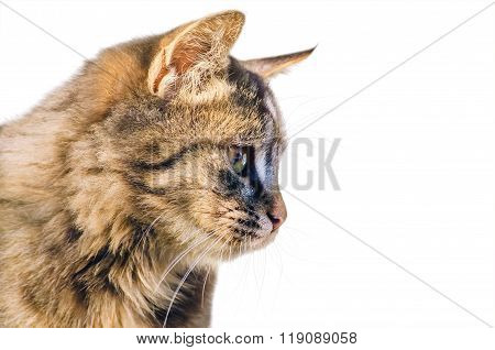Portrait Of The Cat