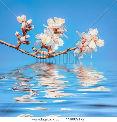 Spring Flowers over Water
