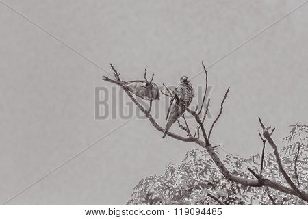 Couple Of Parrots In The Top Of A Tree