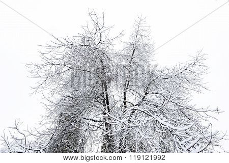 A frozen tree, bottom to top view