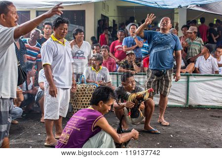 UBUD, BALI /INDONESIA - FEB 22, 2016: Locals during traditional cockfighting. All forms of gambling, including gambling within secular cockfighting, were made illegal in 1981 by Indonesian government.