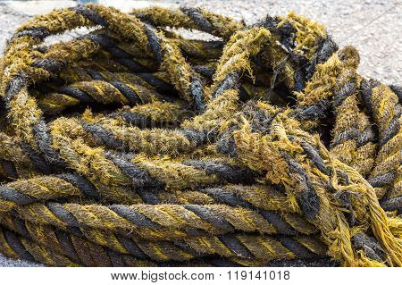 Yellow And Black Frayed Rope