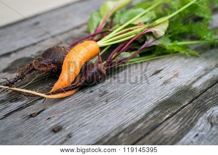 Ugly Carrot And Beetroot