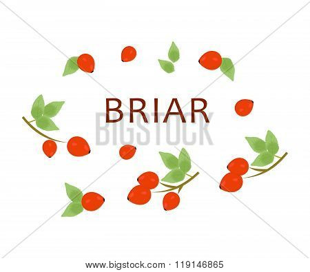 The Red Briar