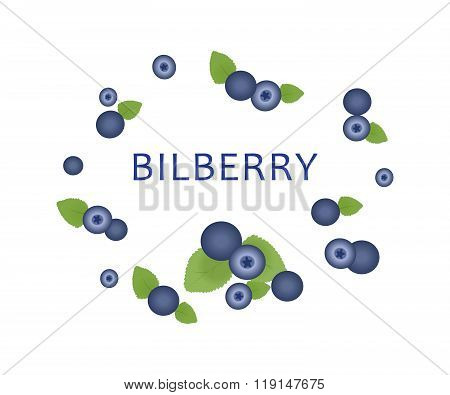 The Blue Bilberry