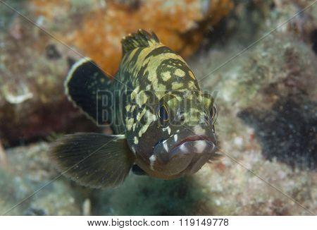 Grouper7