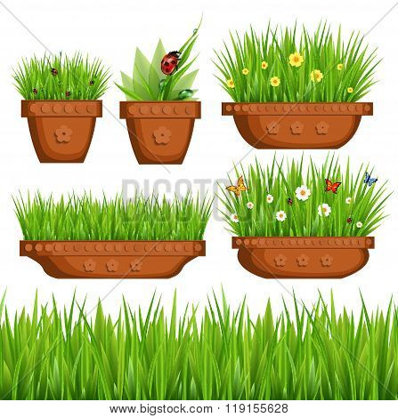 Green Grass In Pots